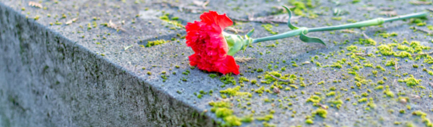 A flower rests on a gravestone